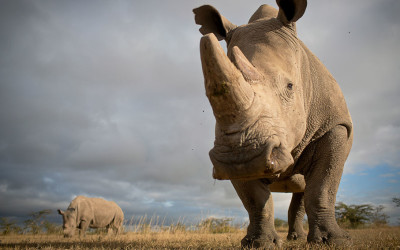 Diverse opinions on the poaching crises