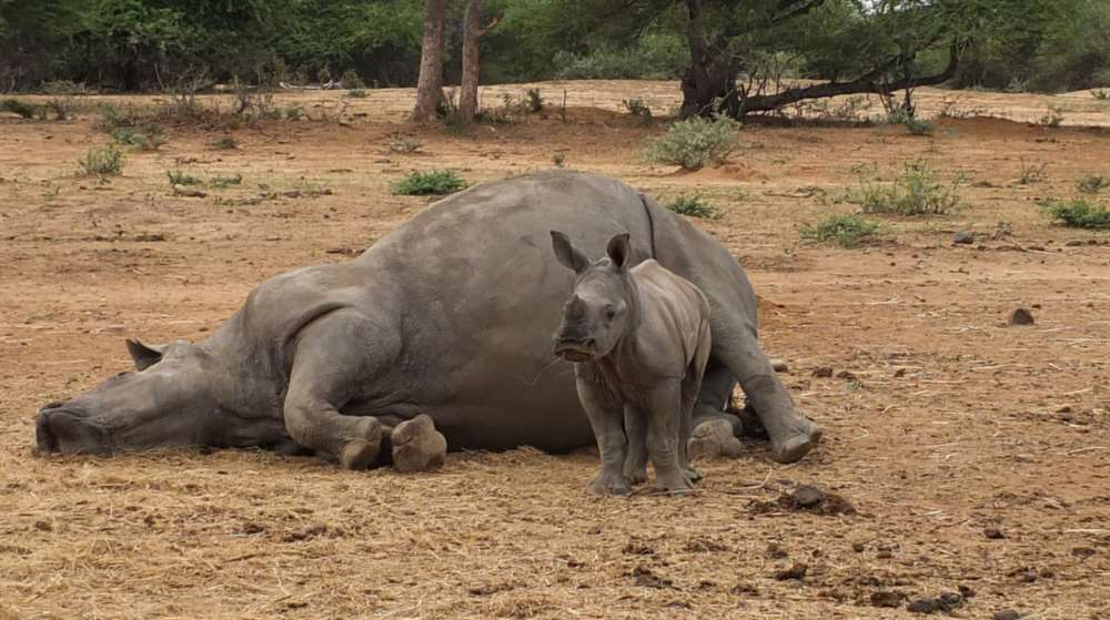 Expressen highlights poaching crises in South Africa