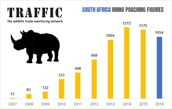 Rhino Poaching Numbers Decline in South Africa in 2016-but the crisis persists