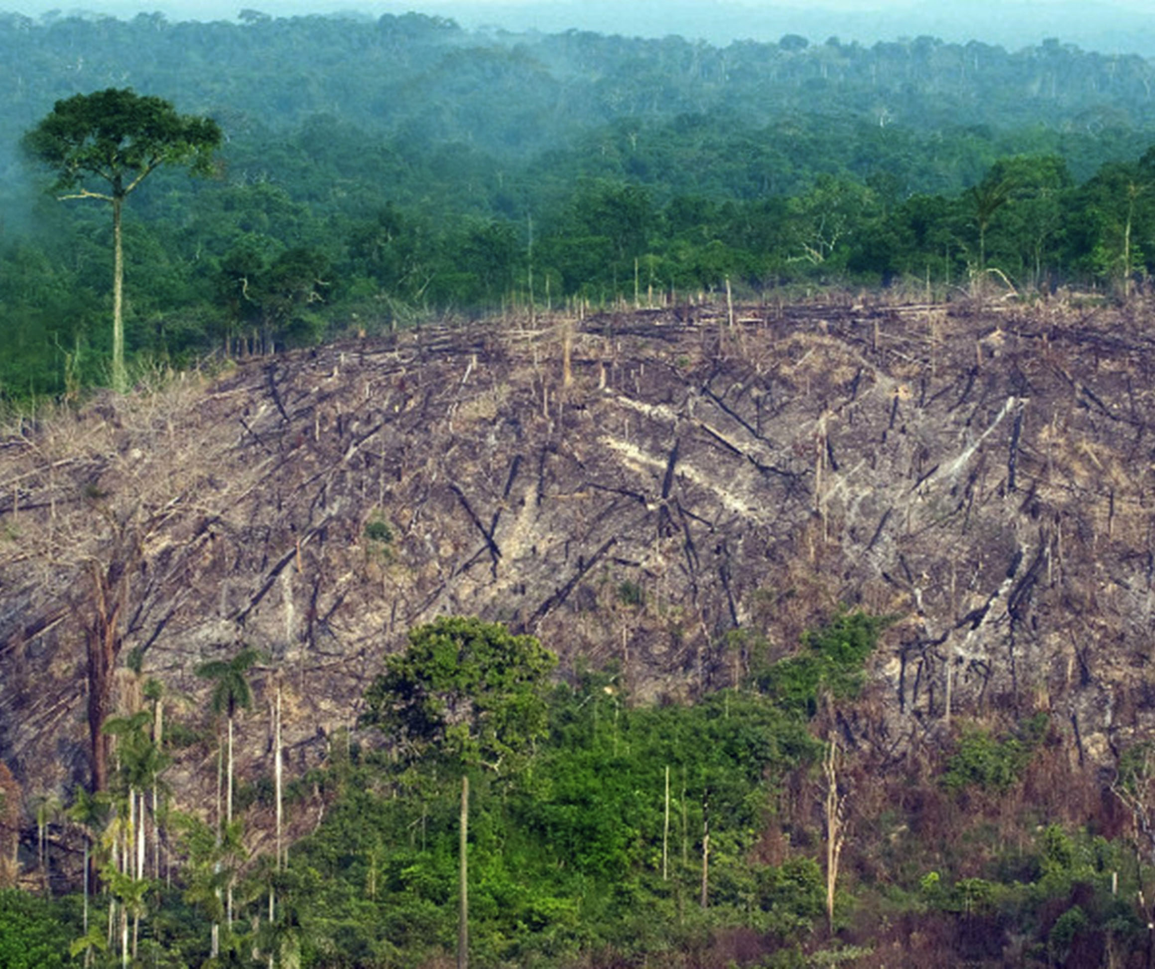 deforestation cuba The us government's key strategy to help haiti to preserve its environment focuses on the creation of environmentally friendly  widespread deforestation.