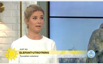 Wildhood in Swedish Television channel TV4